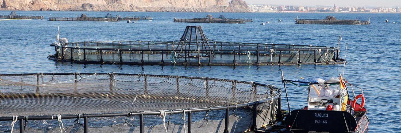 La acuicultura, un aliado de la conservación.