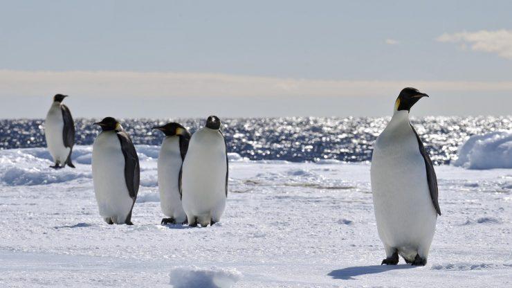 Pingüinos en el mar de Ross.