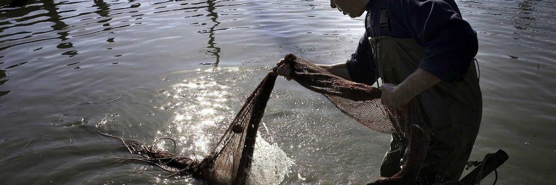 Ayudas de Cantabria a inversiones en acuicultura.