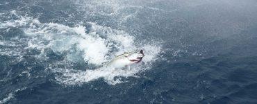 Atún rojo en el Golfo de Vizcaya.