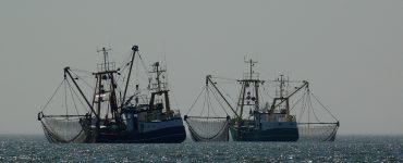 Pesqueros en alta mar.