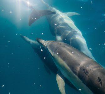 Delfines en el mar.