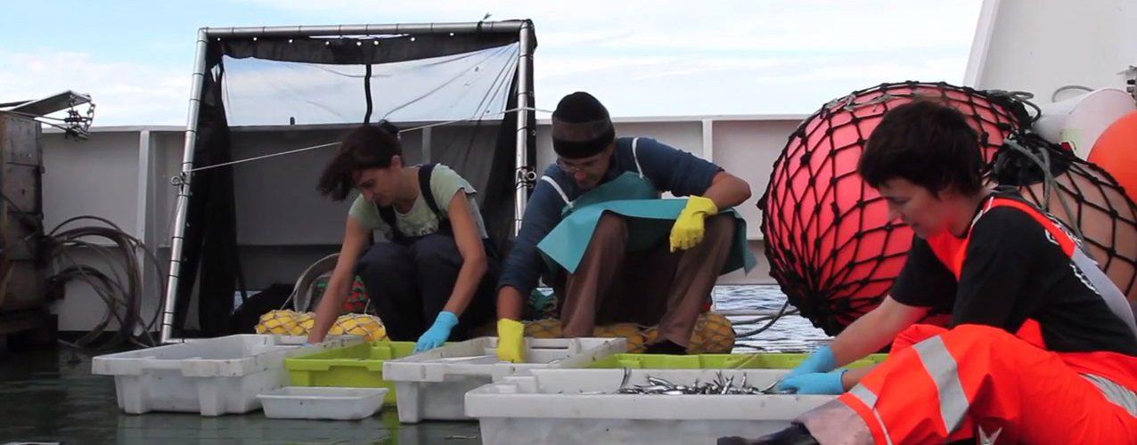 Investigadores a bordo de uno de los dos buques que han participado en la campaña JUVENA 2017.
