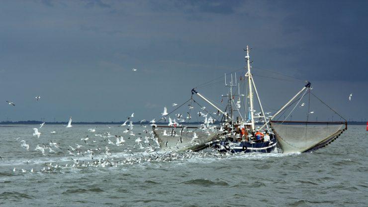 Pesquero rodeado de gaviotas.