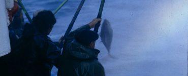 Pesca artesanal de bonito del Norte.