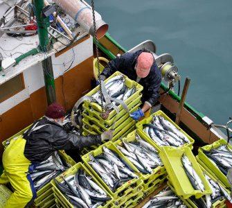 Un barco de artes menores descarga en el puerto de Castro-Urdiales (Cantabria) durante la costera del verdel.